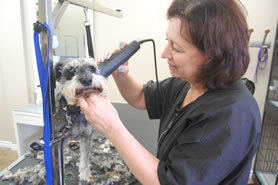 Dog grooming at Uptown Pet Grooming in Ottawa
