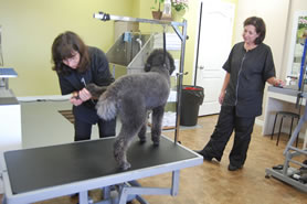 Nepean pet grooming at Greenbank Hunt Club Centre